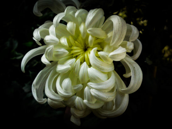 White variety flower - Very rare flower
