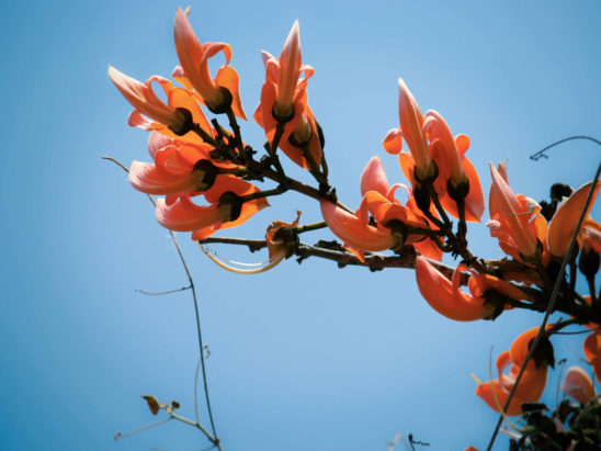 Fire Flower with Sky Background