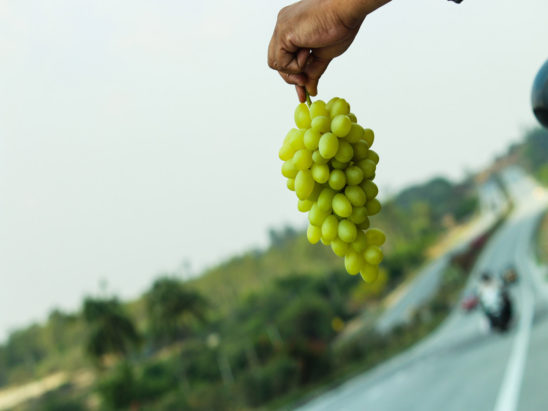 grapes in hand - highway selling