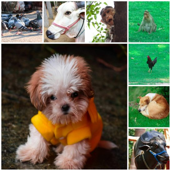 pets and farm animal collage