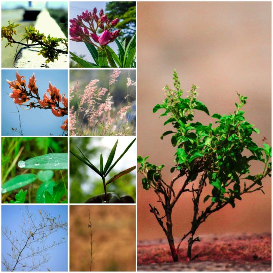 plants isolated collages