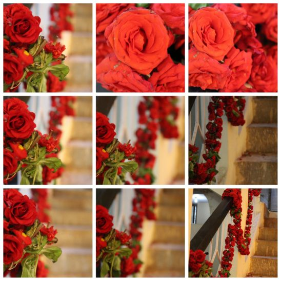 rose collages