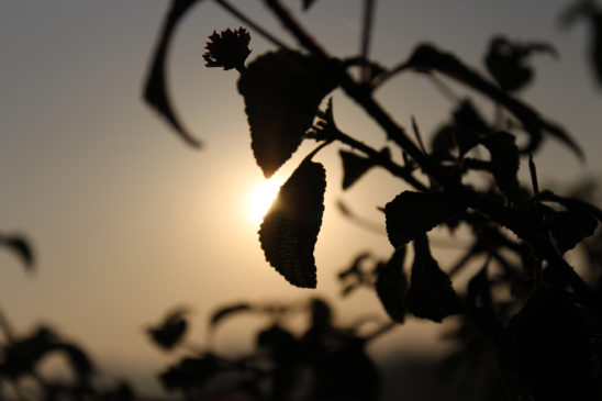 sun behind the leaves
