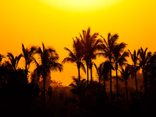 sunrise with coconut trees background