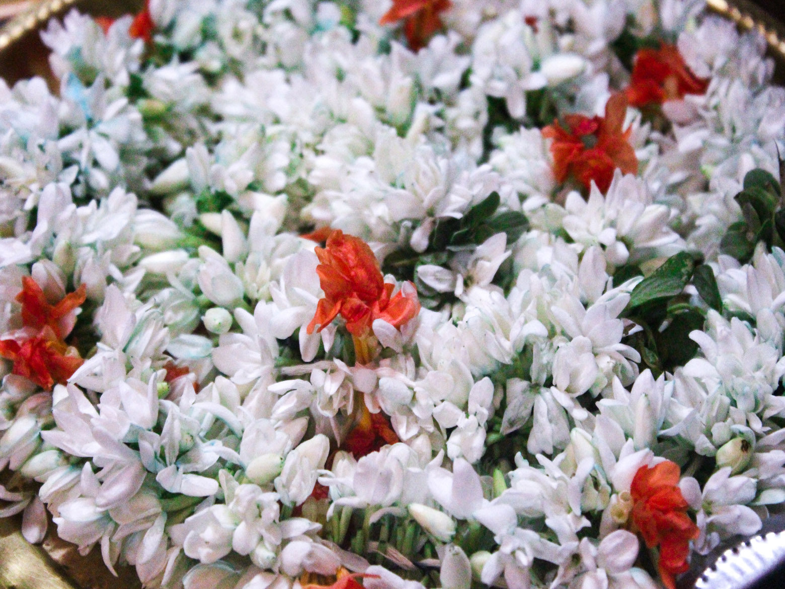Jasmine Flower Garland Free Indian Stock Pictures Download For
