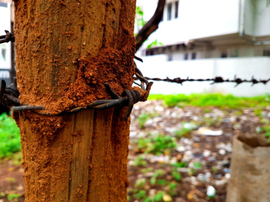 anthill and barbwire