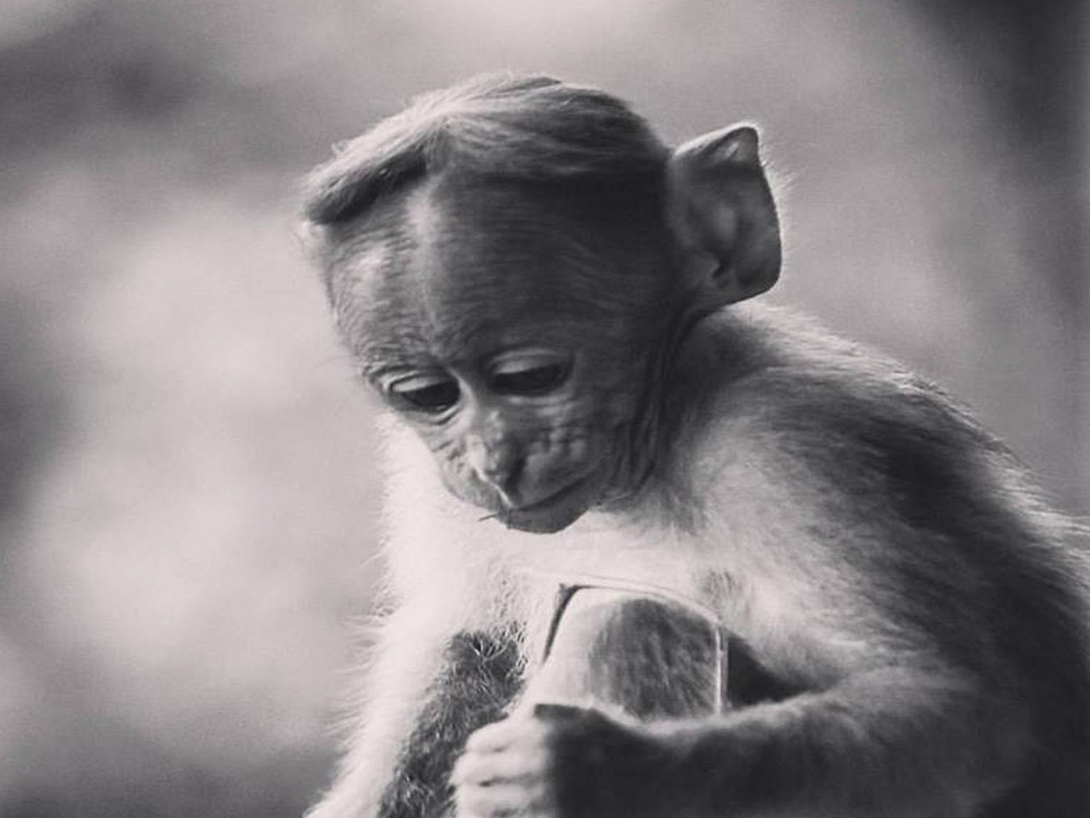 baby monkey in black and white - Free Indian Stock ...