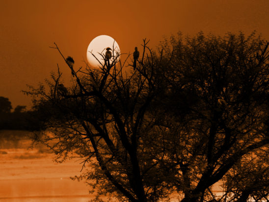 birds sitting on trees in sunset