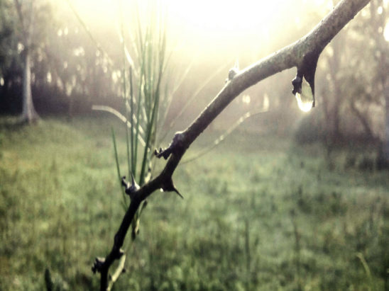 EEarly Morning Dew in Forest