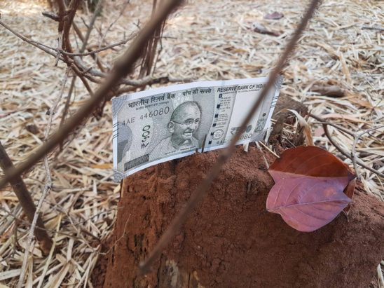 500 rs falling on anthill