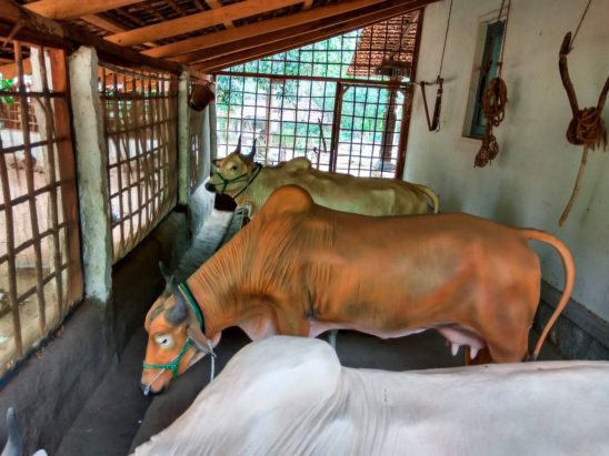 indian cow shed