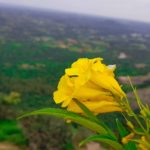 yellow flower with sky backdrop