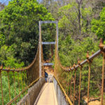 cable Bridge in forest