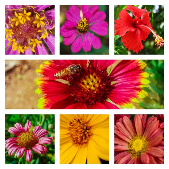 polen of various flowers collages