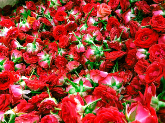Red Button Roses