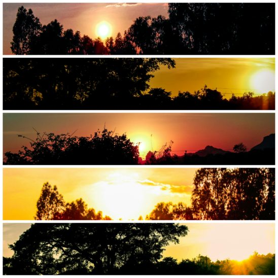 sunset and trees collages