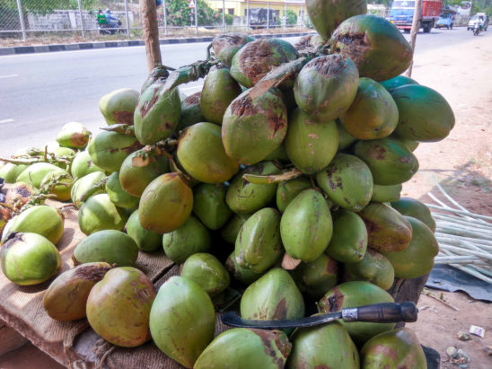 tender coconut sold on streets