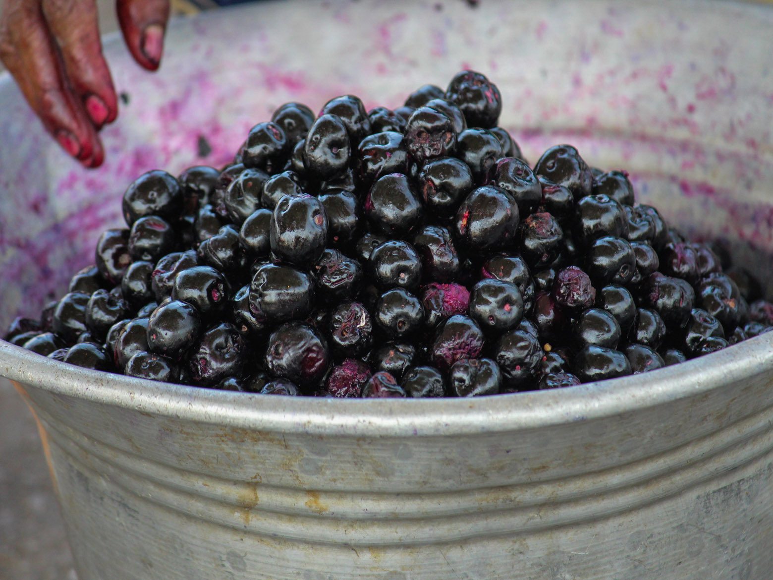 Blue berry for sale - Free Indian Stock Pictures  Download
