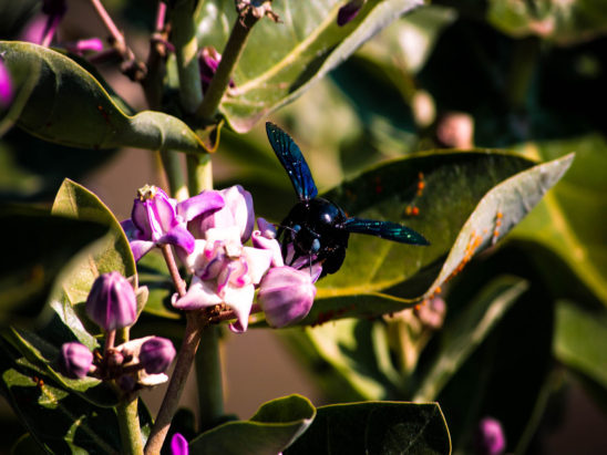 Insects on Plant Polen