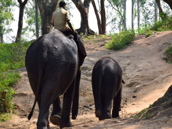 elephant and its baby walking