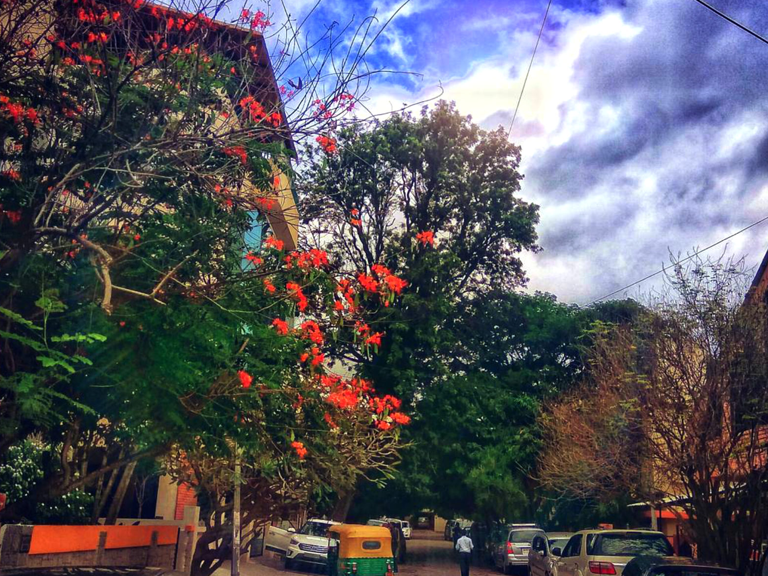 Trees In Bangalore